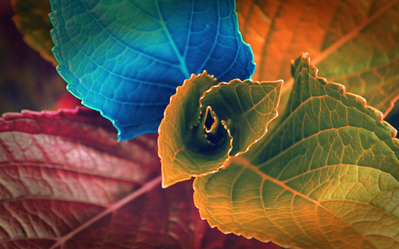 1280x800 Colorful leaves hd Wallpaper