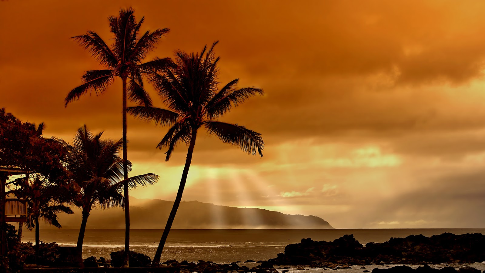 HD WALLPAPERS: Palm trees nature HD wallpaper (1920 x 1080)