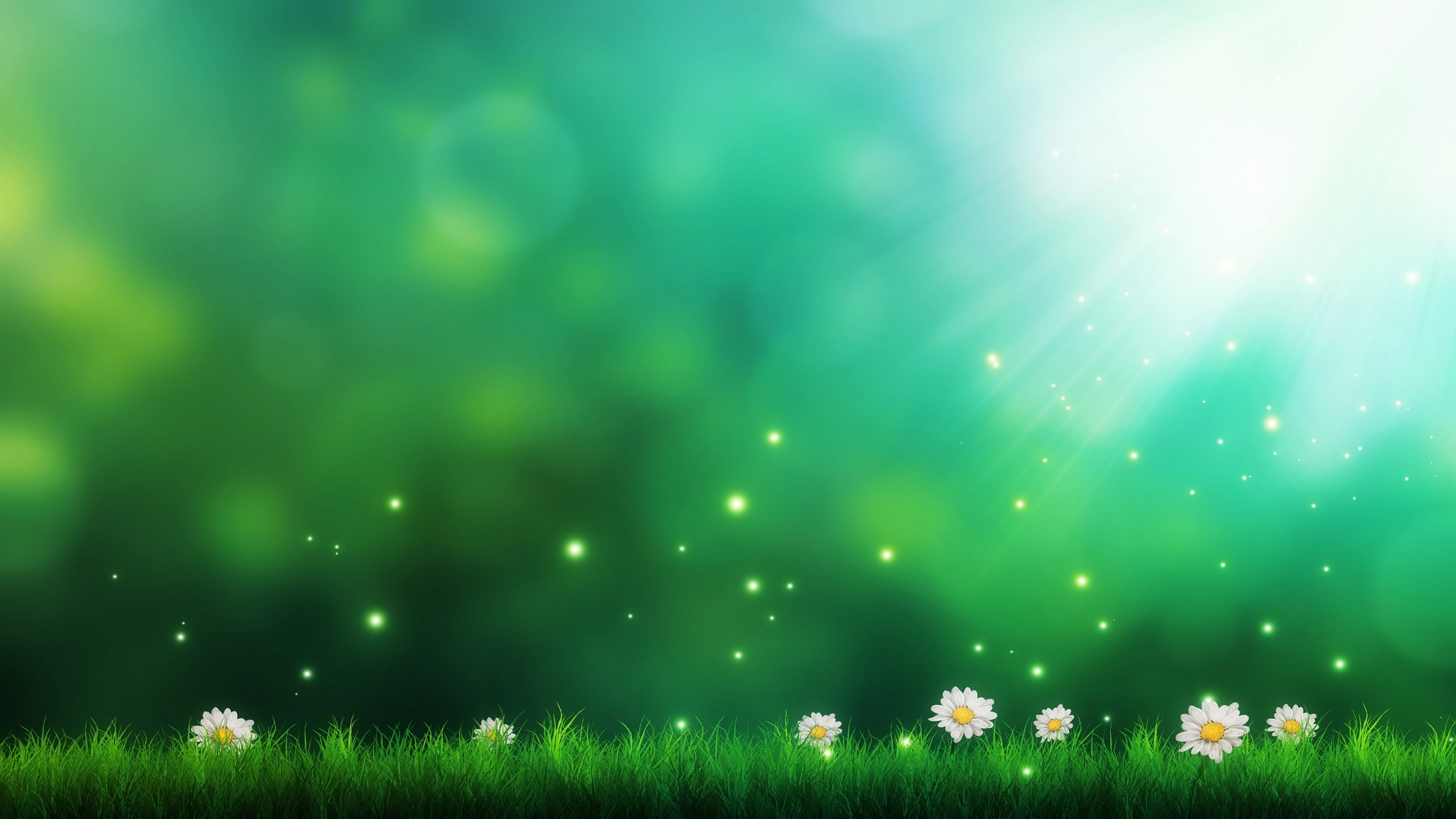 2560x1440 Daisies green background Wallpaper