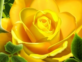 Wallpaper 3d flower wallpapers for free download about (3,904