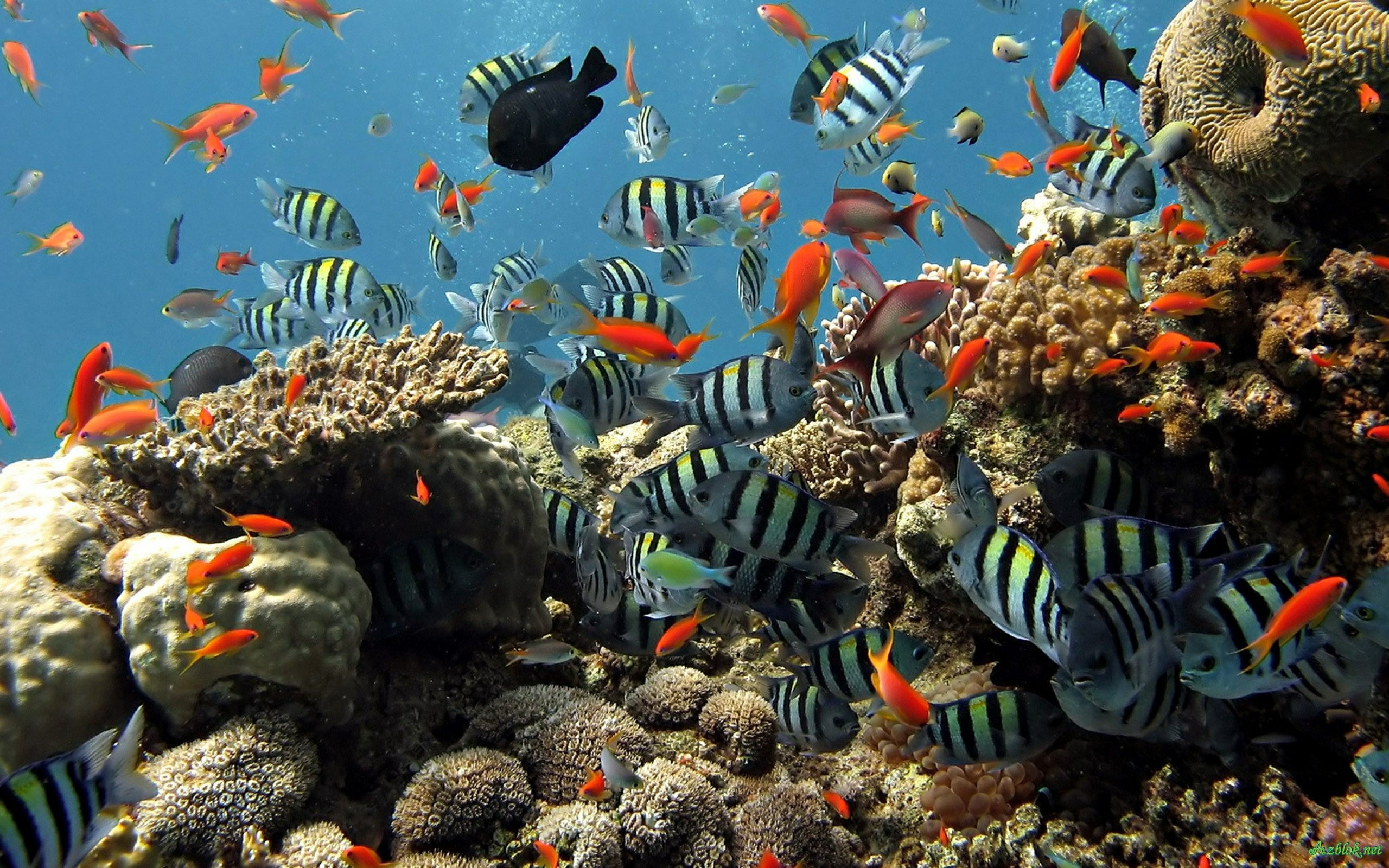 Live Hd Wallpaper Aquarium 3d Desktop Aquarium 3d Mac Live