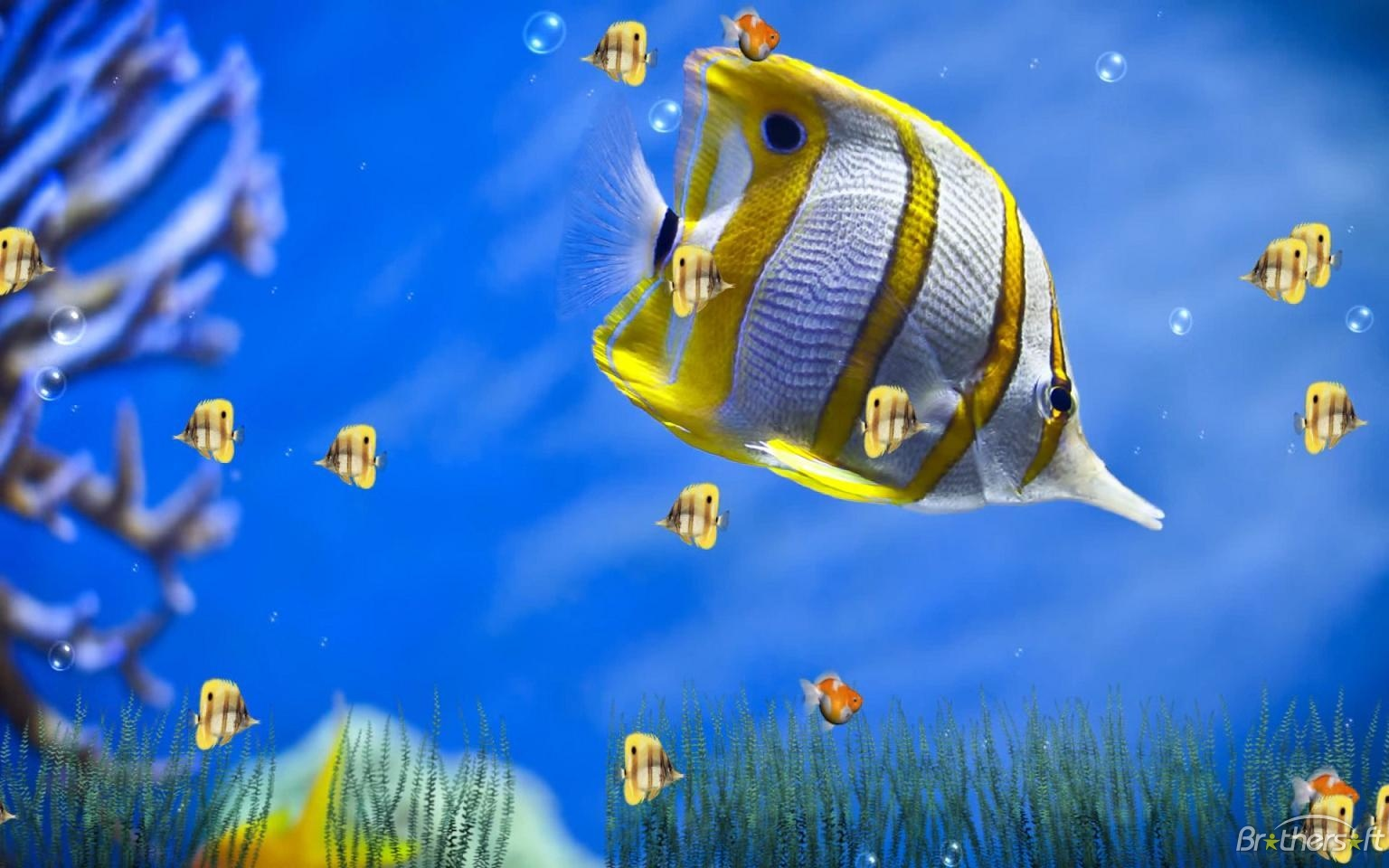 3d animation wallpaper for windows 7 sf wallpaper.
