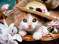 1000+ ideas about Cute Cat Wallpaper on Pinterest | Cat phone