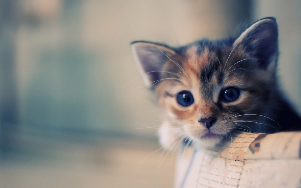 Cute Cat Wallpaper for Desktop - WallpaperSafari