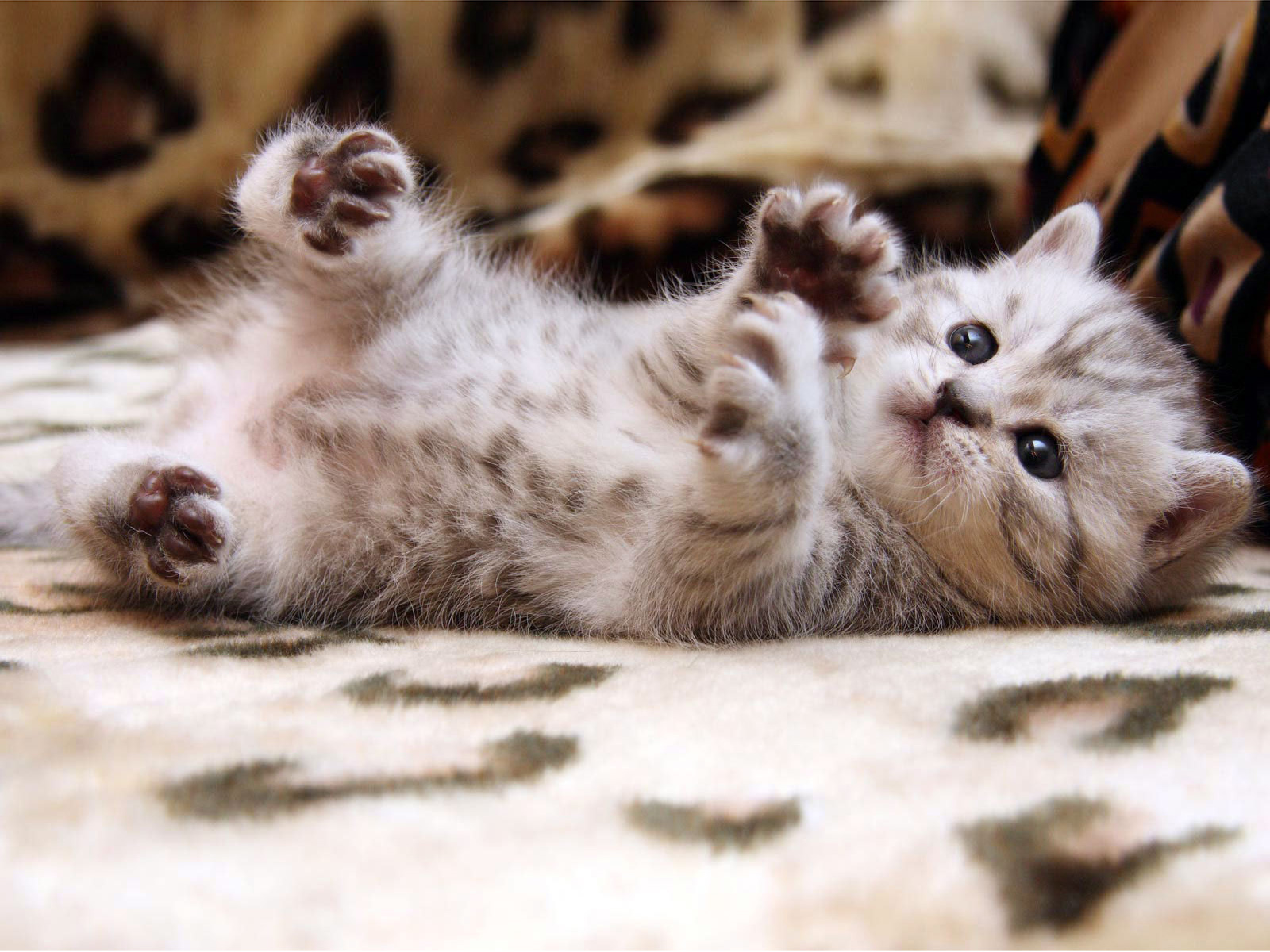 1000+ ideas about Cute Cat Wallpaper on Pinterest | Cat phone