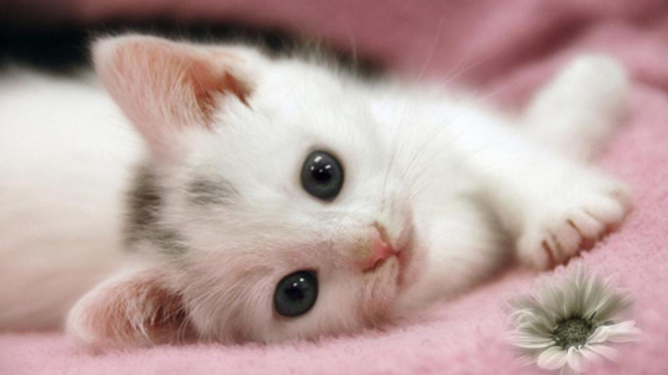 Adorable Cat wallpaper | 1366x768 | #3591