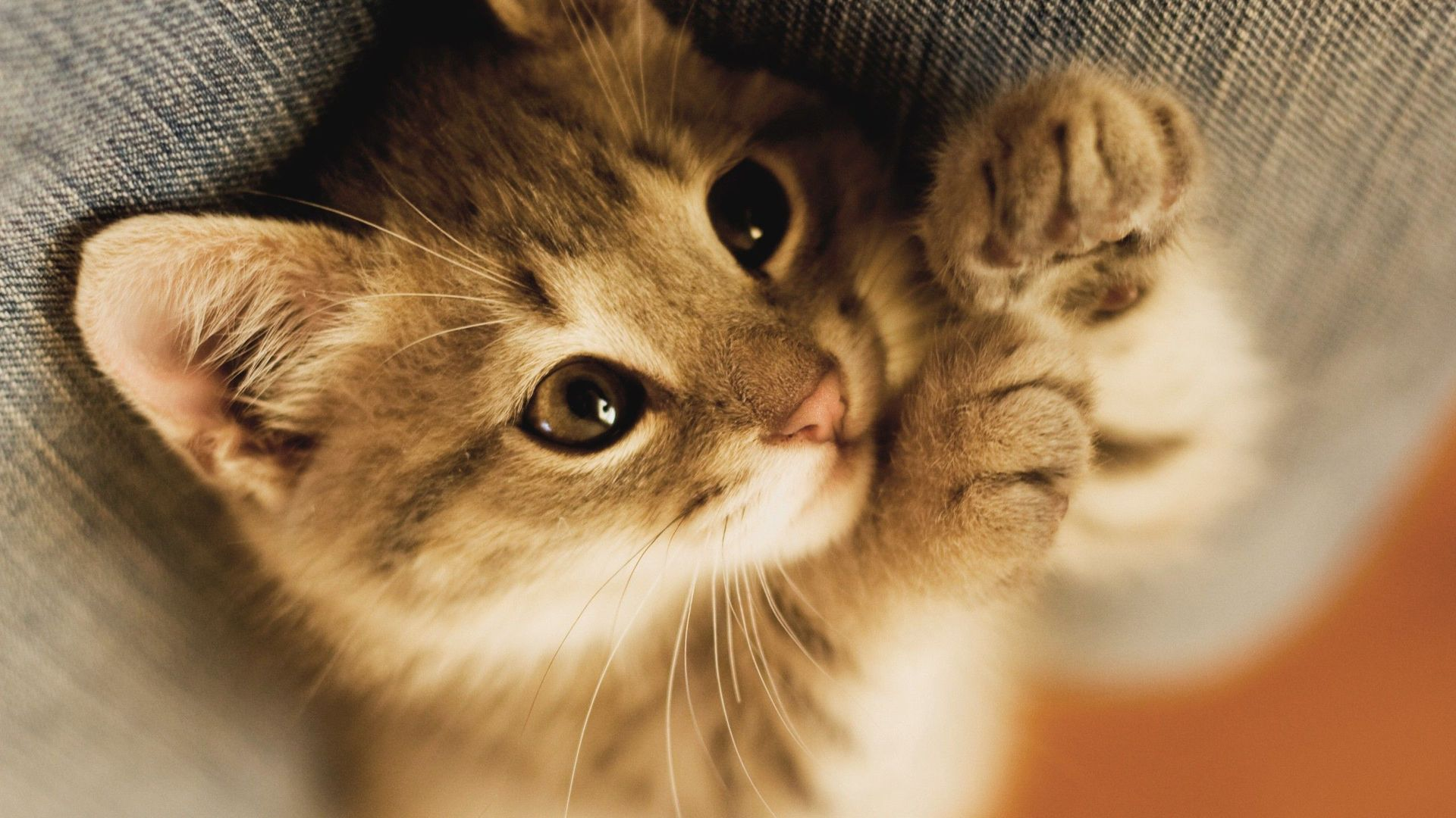 Adorable Cat Wallpapers Group (71+)