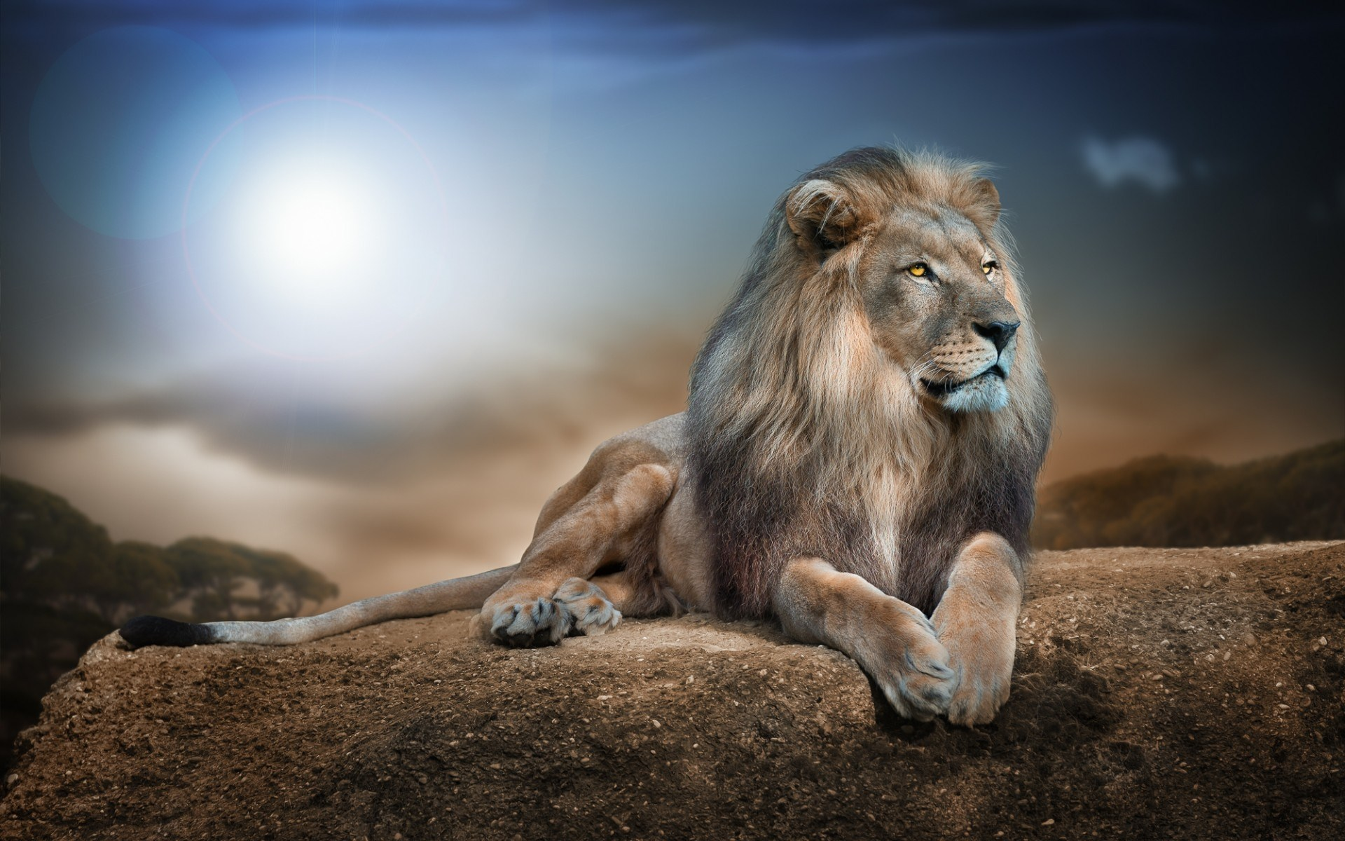 Lion HD Wallpapers | Lion HD Pictures | Free Download – HD