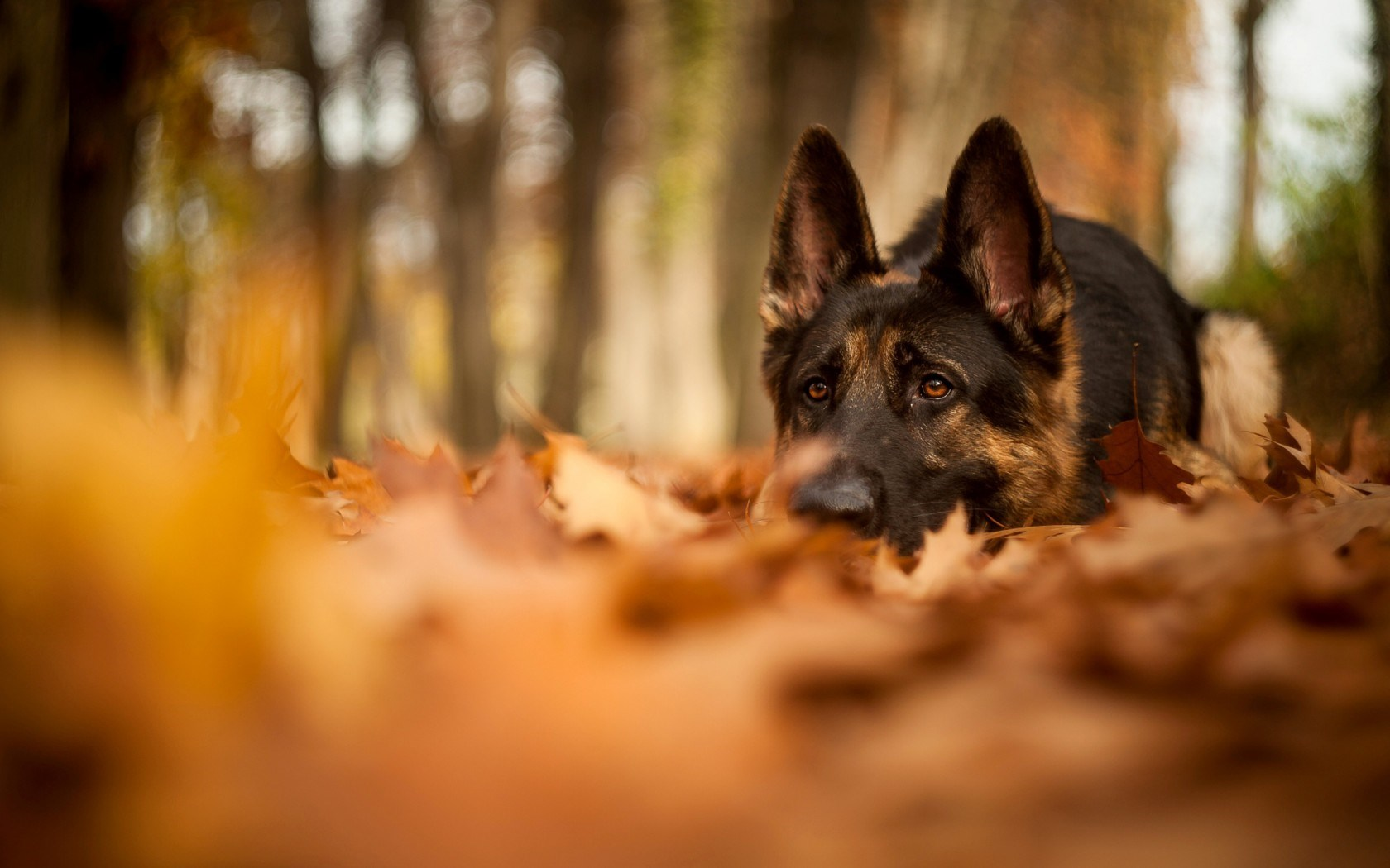 Fall with Animal Background Wallpapers 4115 - Amazing Wallpaperz