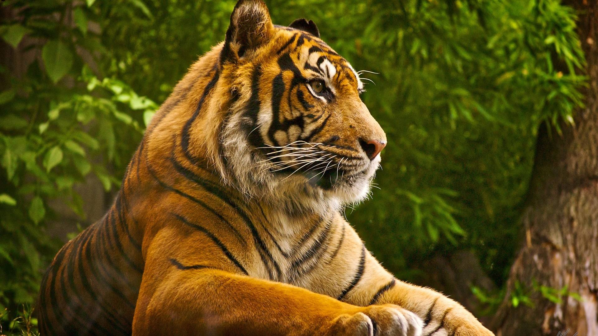 Beautiful Nature Animals - wallpaper