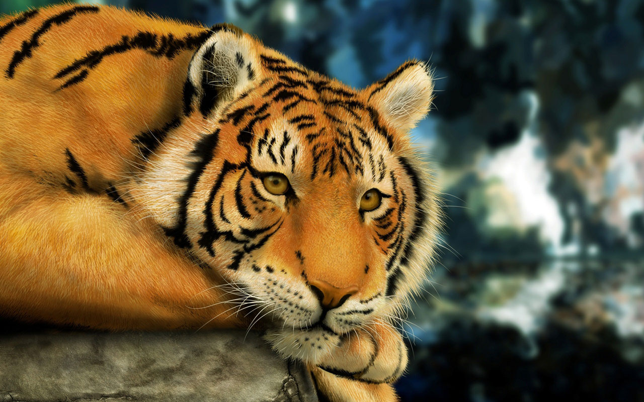 Collection of Animal Nature Wallpaper on HDWallpapers