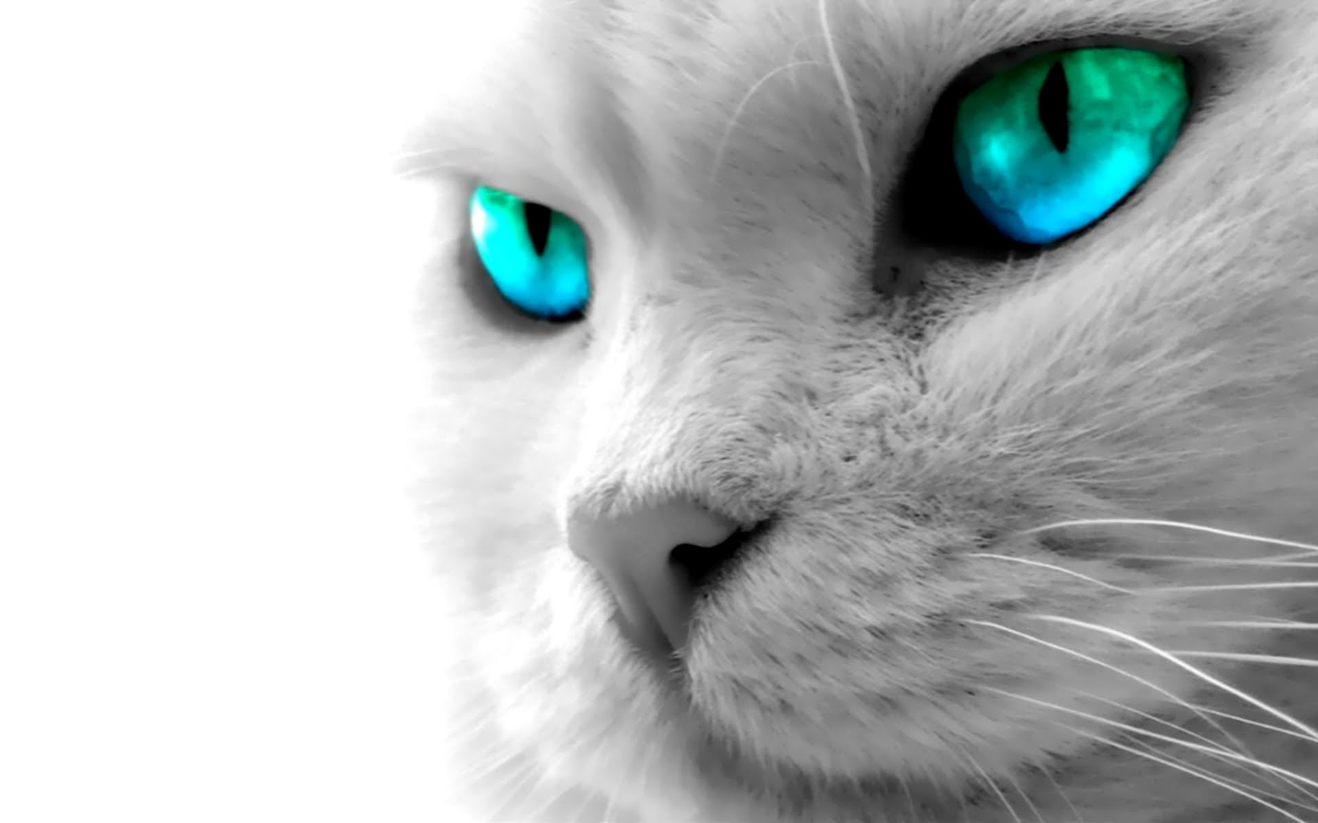 iPhone 6 Plus Wallpapers: Animal Wallpapers - YouTube