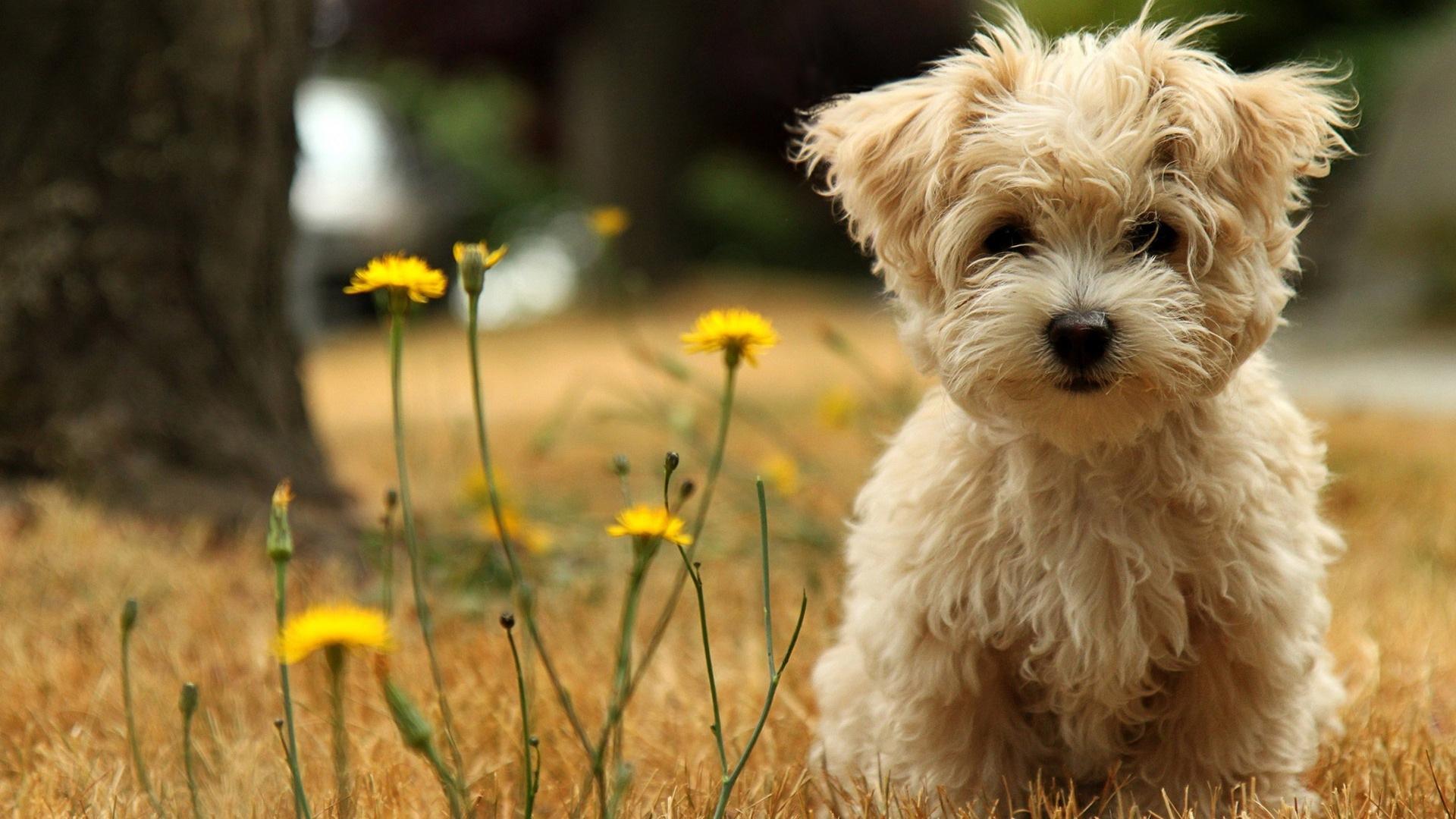 Free Cute Little Animals & Birds Desktop Wallpapers in HD