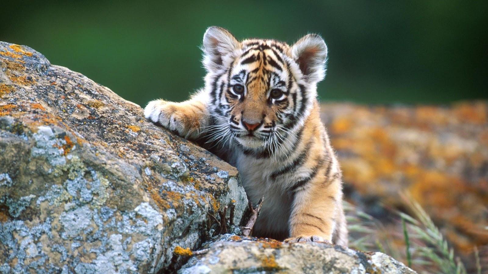 baby animal wallpaper | Free desktop wallpapers - WallpaperToon