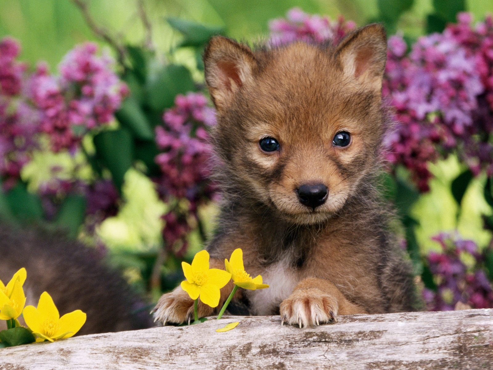 Baby animals wallpapers for free download about (935) wallpapers