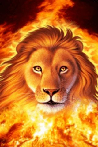 Download Animated 320x480 «Lion» Cell Phone Wallpaper  Category