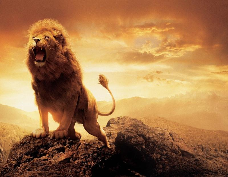 Collection of Animated Lion Wallpaper on HDWallpapers