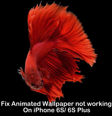 Fix Animated Wallpaper not working on iPhone 6S [How to]