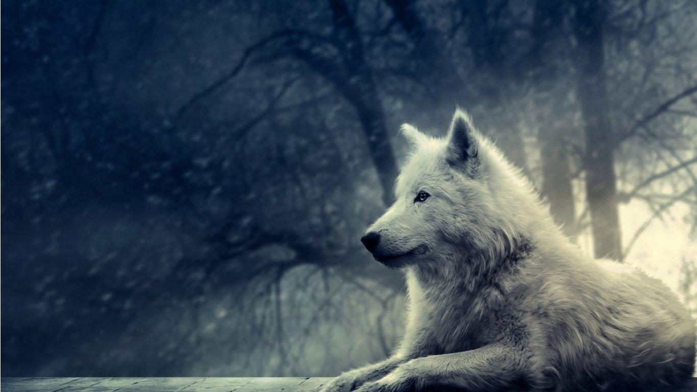 1000 Ideeen Over Anime Wolf Wallpaper Op Pinterest