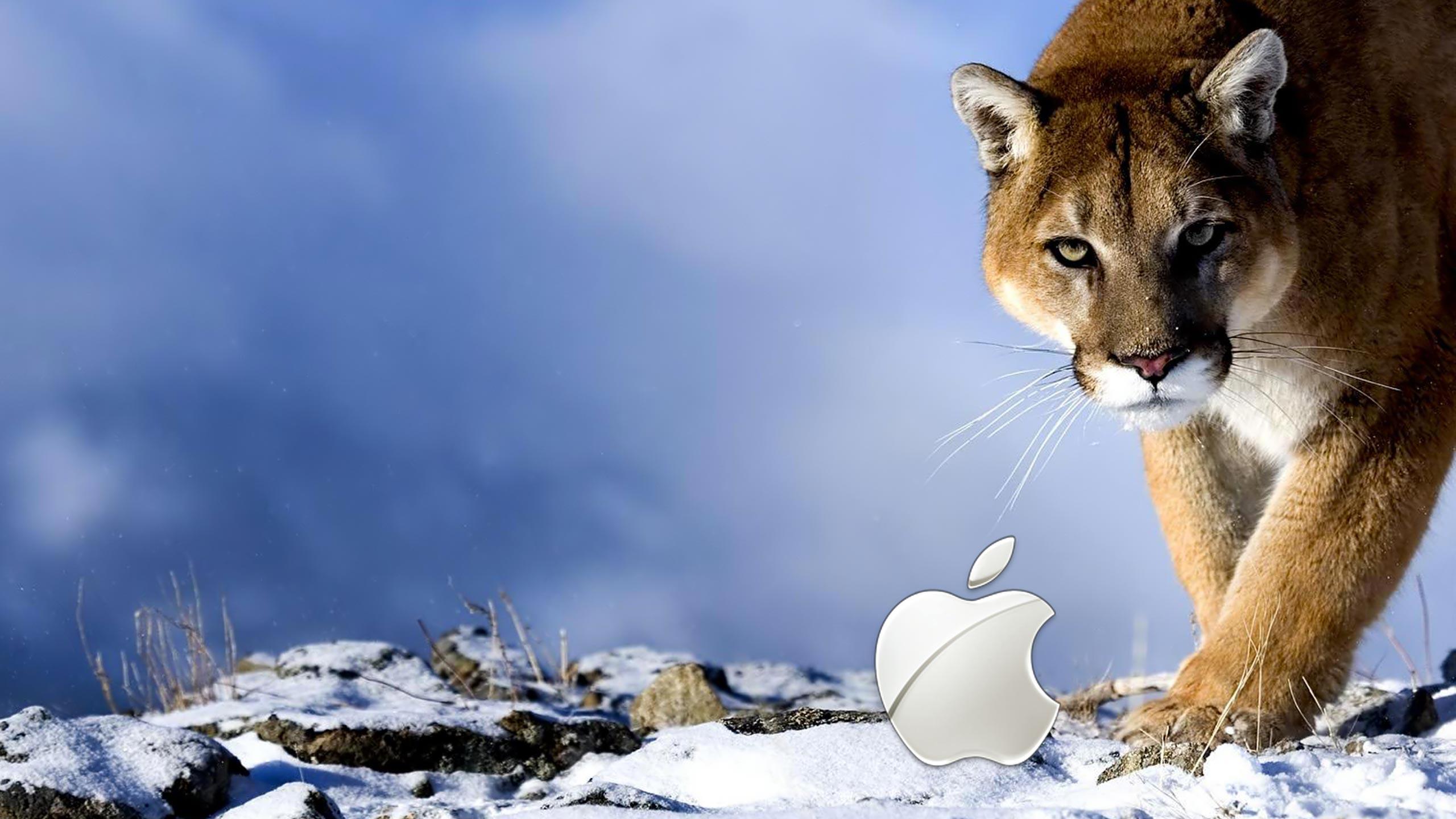 Amazing Wallpaper Mac Snow Leopard - apple-leopard-wallpaper-18  Gallery_28180.jpg