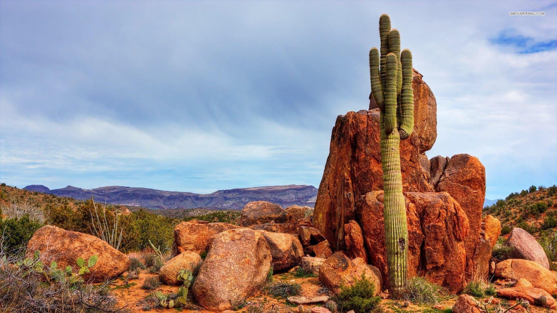Saguaro Desert Wallpaper