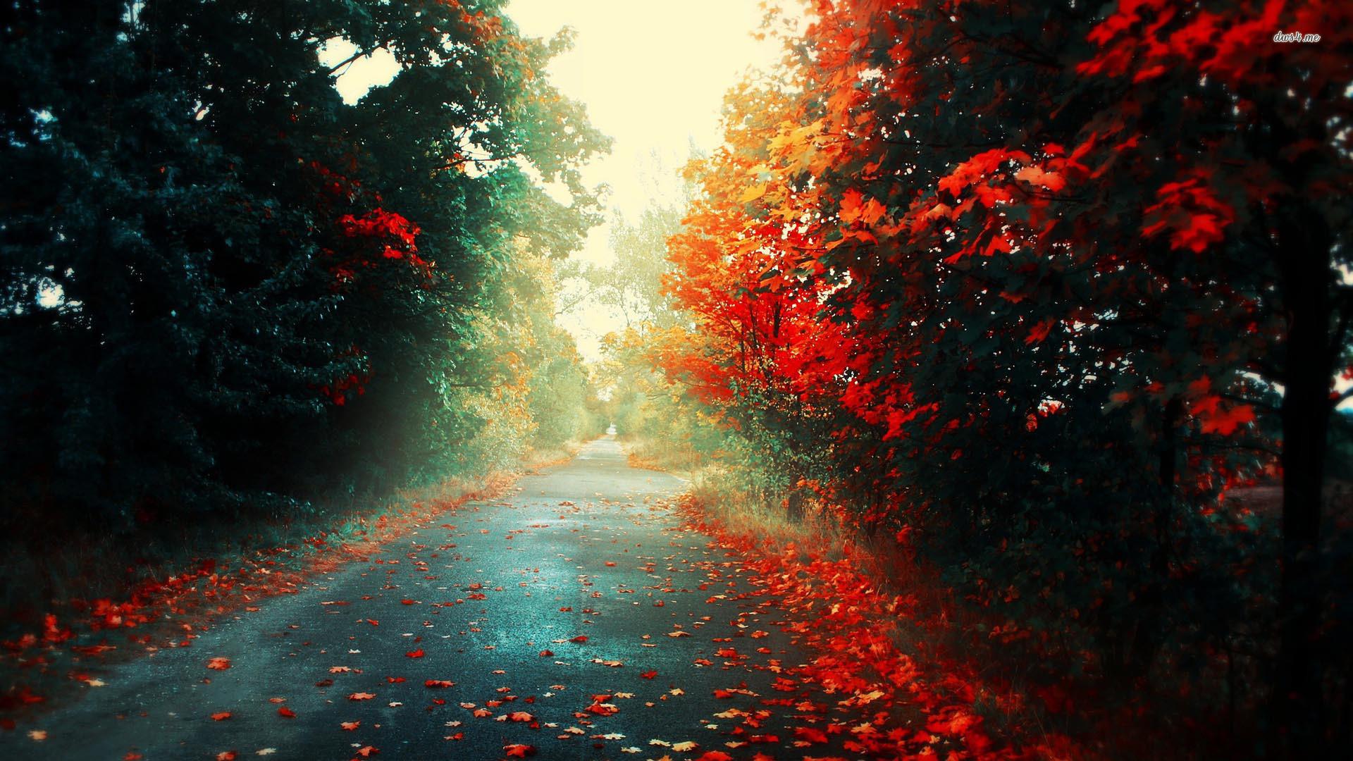 Top Beautiful Artistic Photos, 49-4K Ultra HD, SHunVMall com
