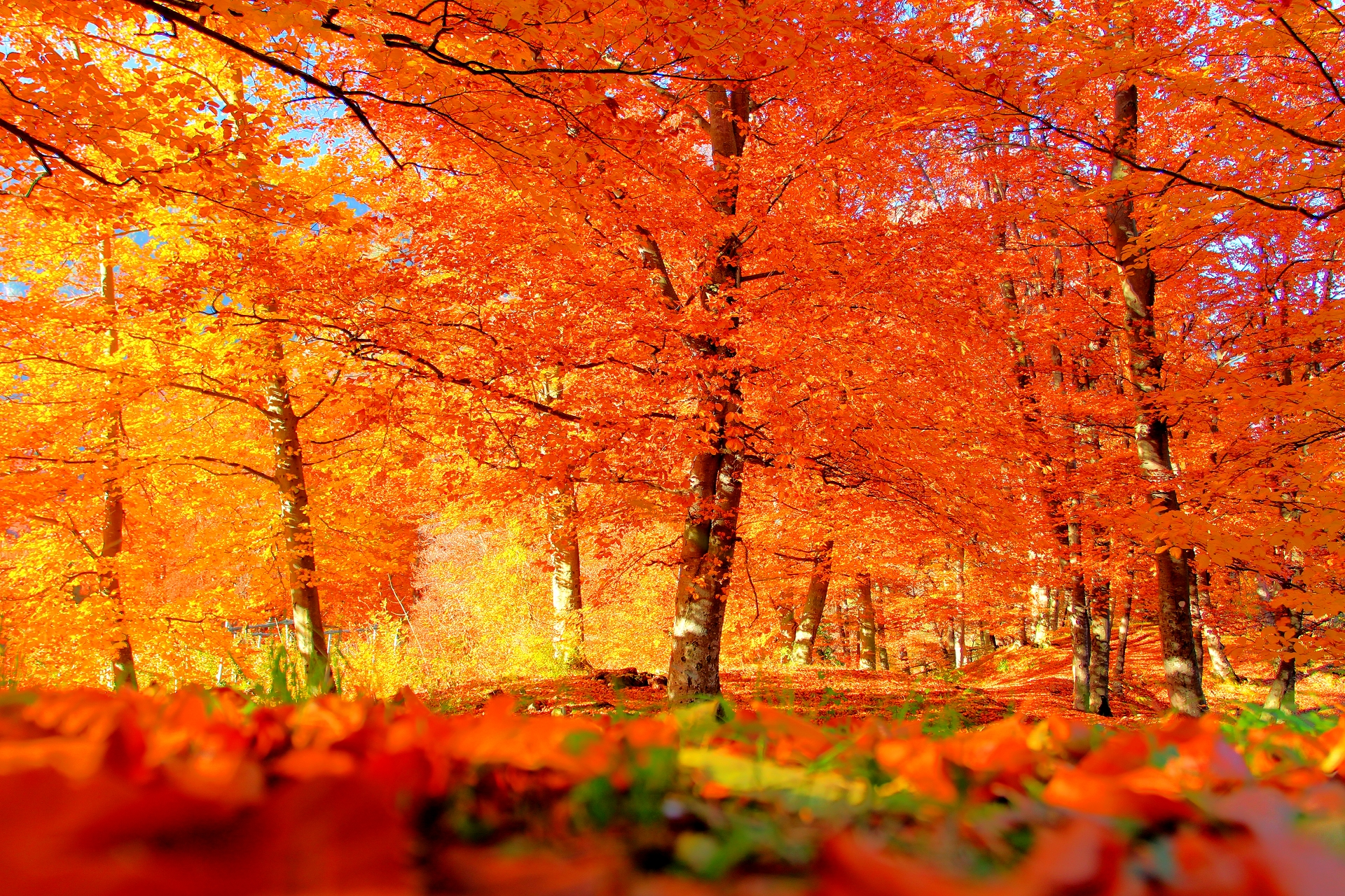 Autumn Images Backgrounds Group (40+)