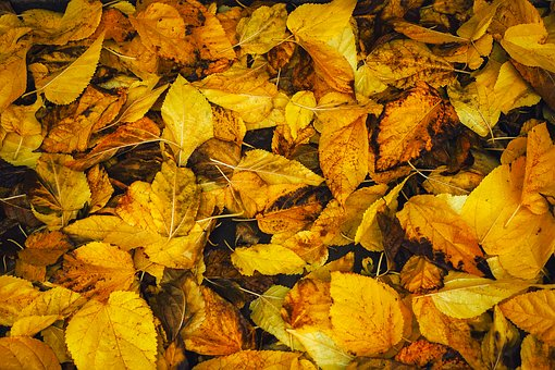 Autumn, Background - Free images on Pixabay
