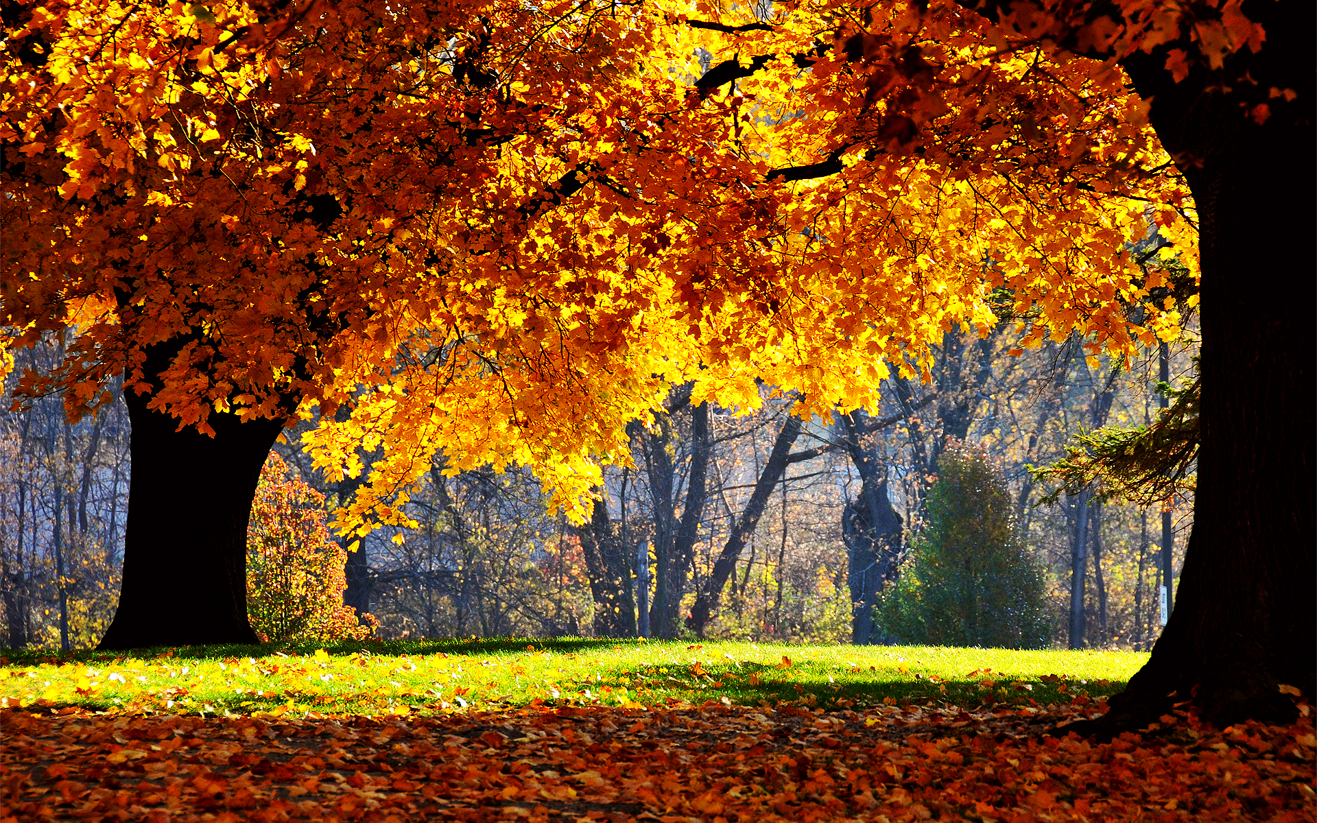Free Autumn Background - WallpaperSafari
