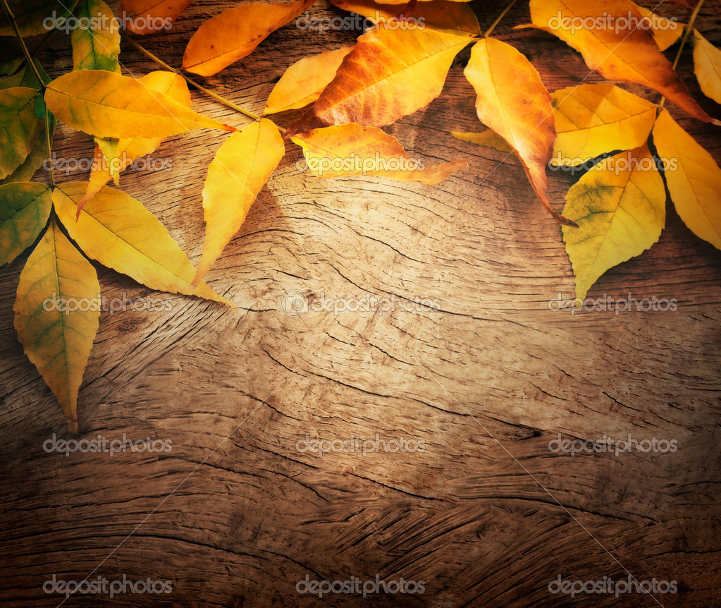 Autumn background — Stock Photo © mythja #12019316