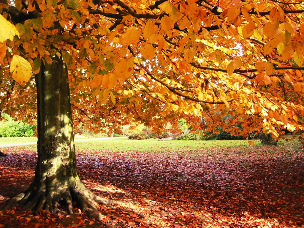 Collection of Autumn Background Pictures on HDWallpapers
