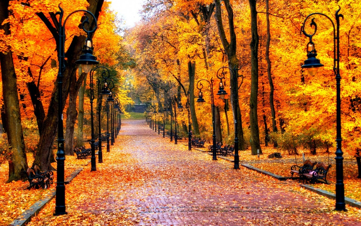Cool Autumn Background 1280x800 - Full HD Wall