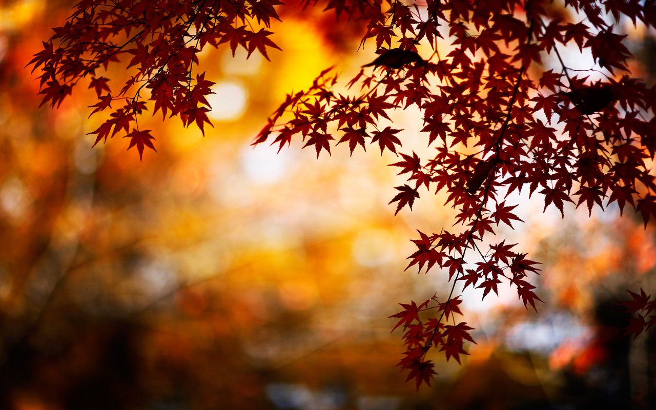 Autumn Background Images - WallpaperSafari