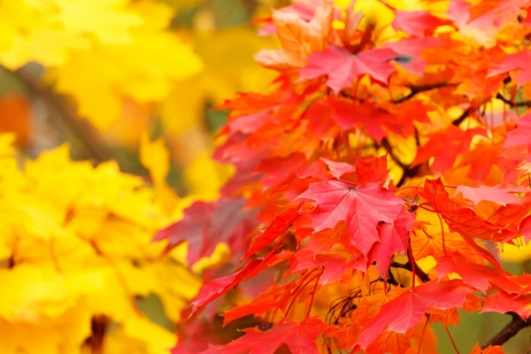 Autumn background free stock photos download (11,804 Free stock