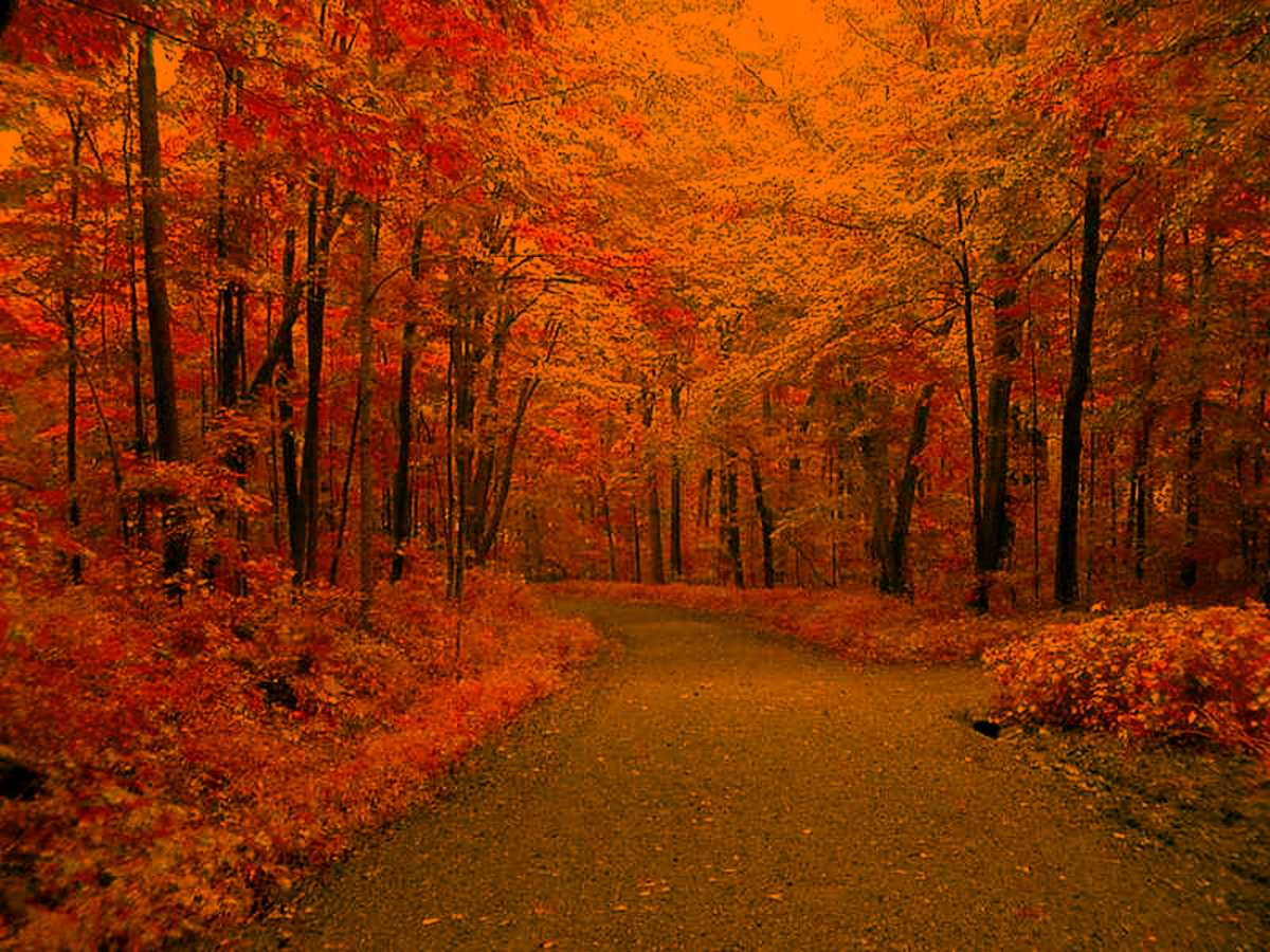 Collection of Autumn Background Wallpaper on HDWallpapers