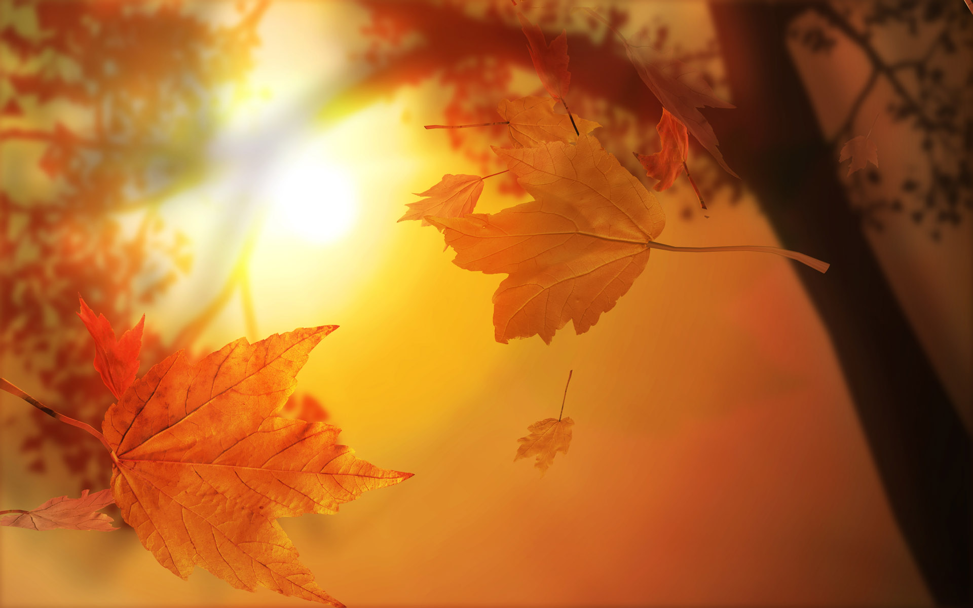 910 Fall HD Wallpapers | Backgrounds - Wallpaper Abyss