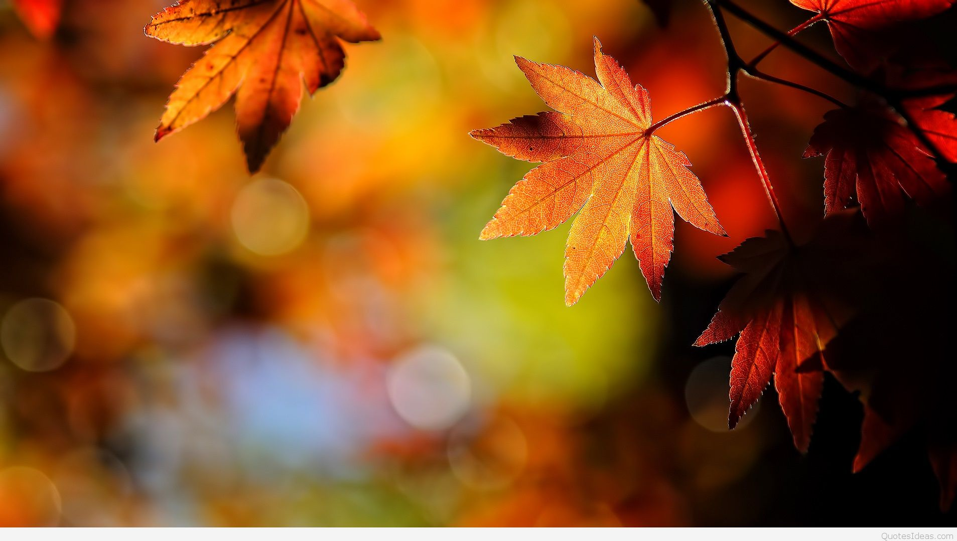 Best Autumn wallpapers quotes, sayings, images hd