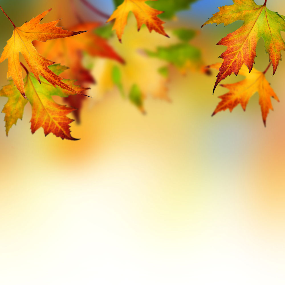 Collection of Background Autumn on HDWallpapers