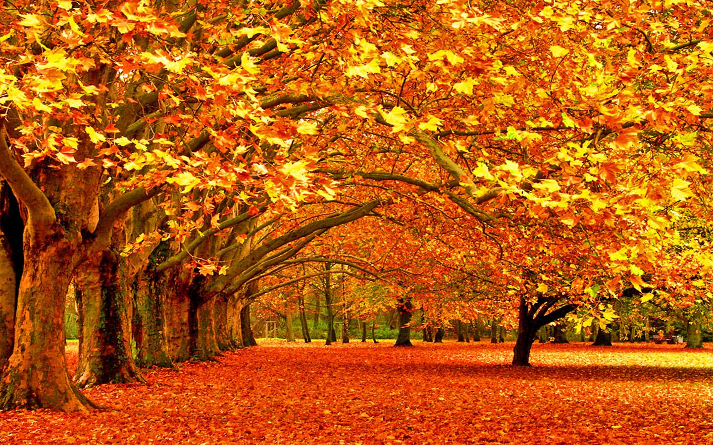 Autumn Wallpaper - Android Apps on Google Play