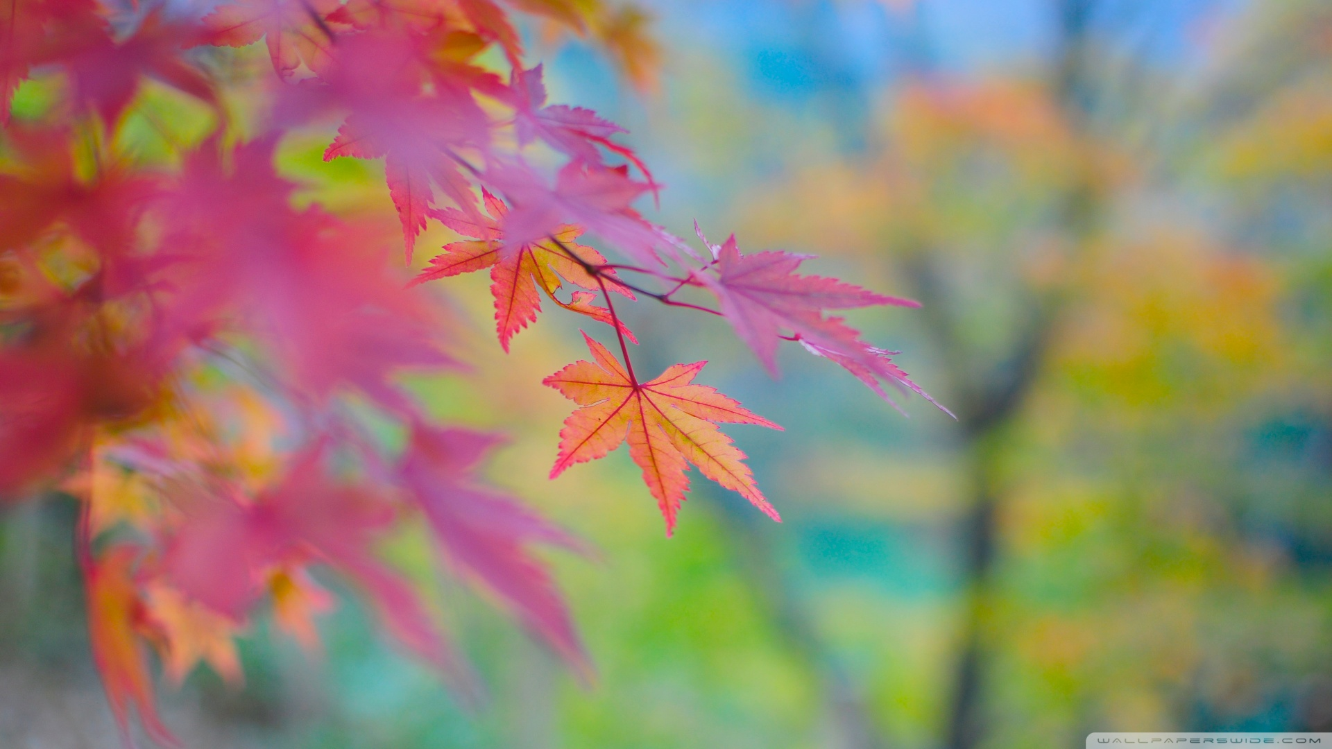 Autumn Colors In Japan HD desktop wallpaper : High Definition