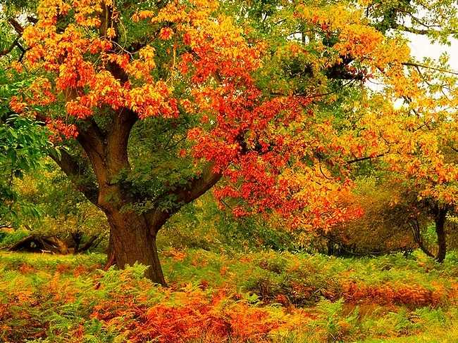 Beautiful Autumn Colors Wallpaper
