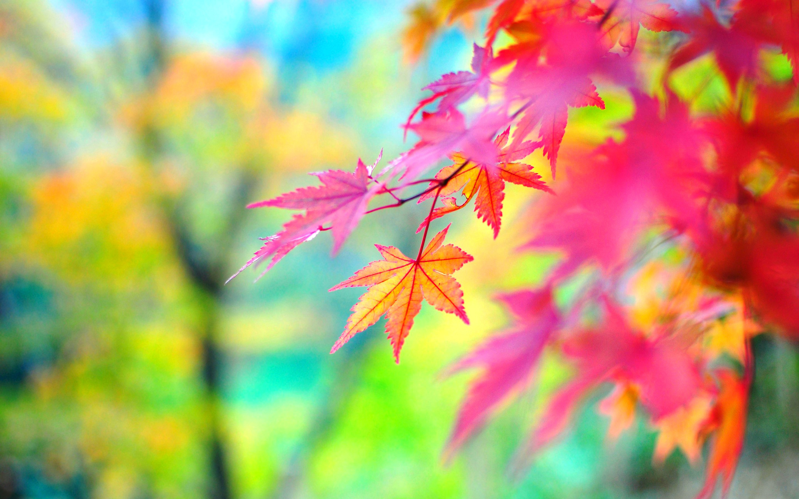 Colors of autumn Wallpapers | Pictures