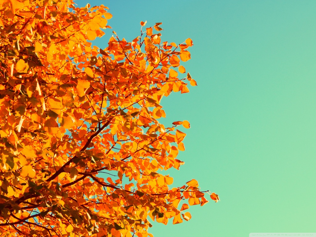 Autumn Colors HD desktop wallpaper : Widescreen : High Definition
