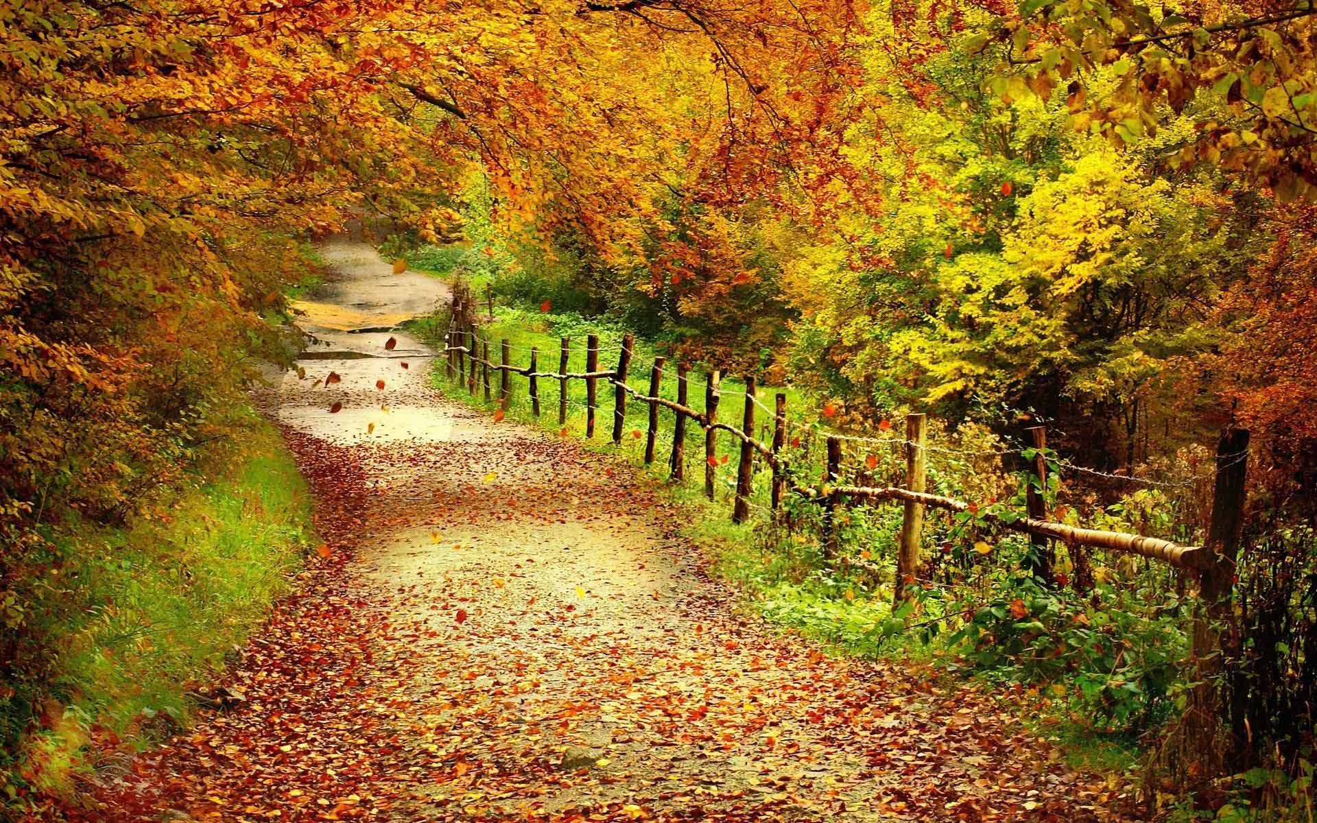 Collection of Desktop Wallpaper Fall on HDWallpapers