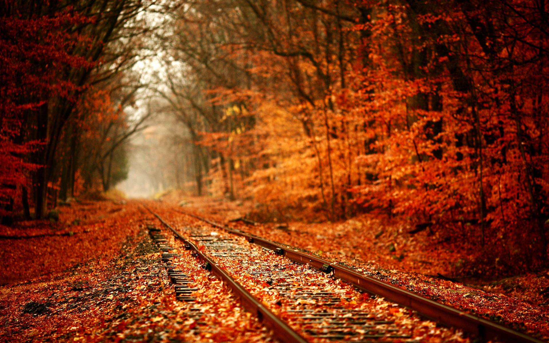 Autumn Nature Wallpapers HD Pictures – One HD Wallpaper Pictures