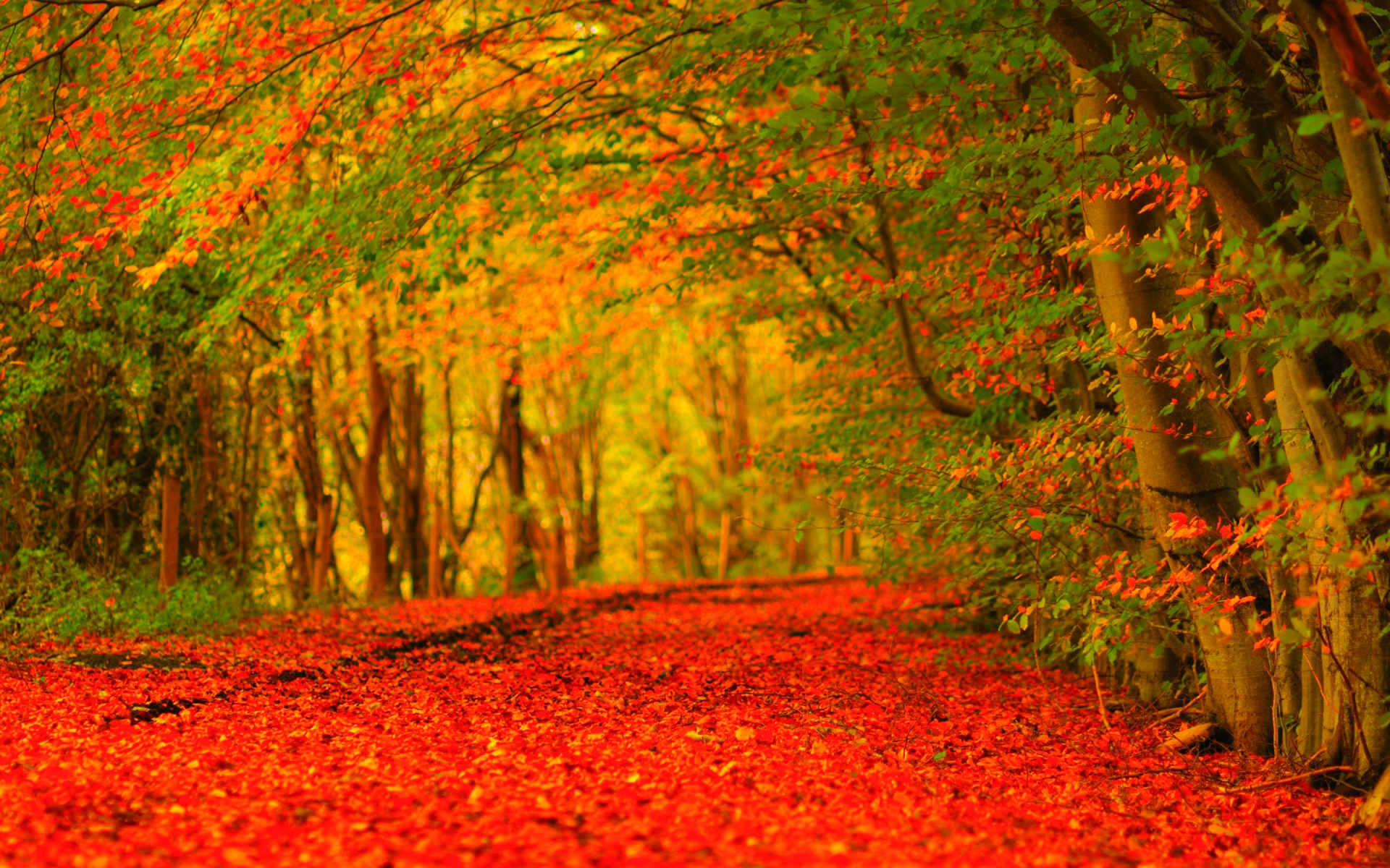 HD Fall Wallpaper For Desktop