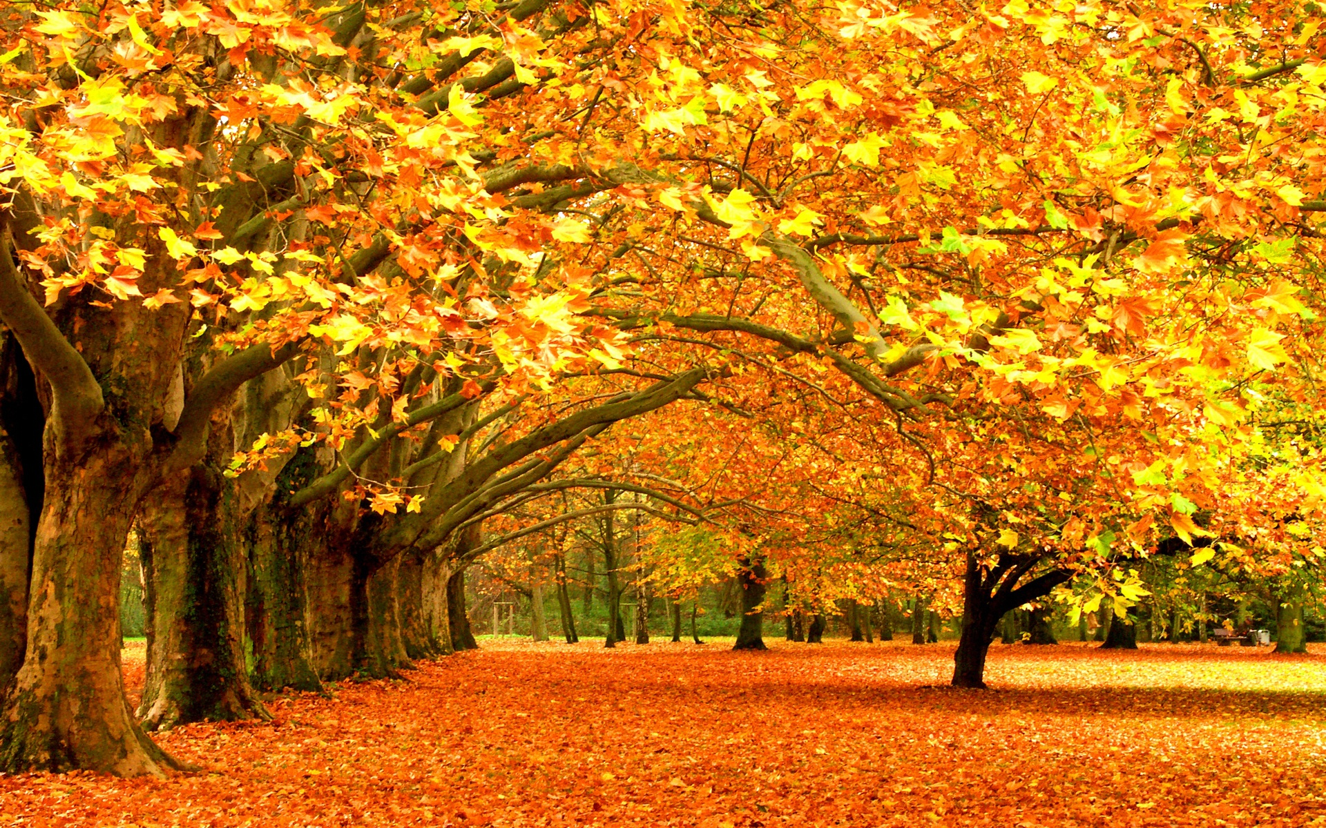 desktop wallpaper for fall season sf wallpaper