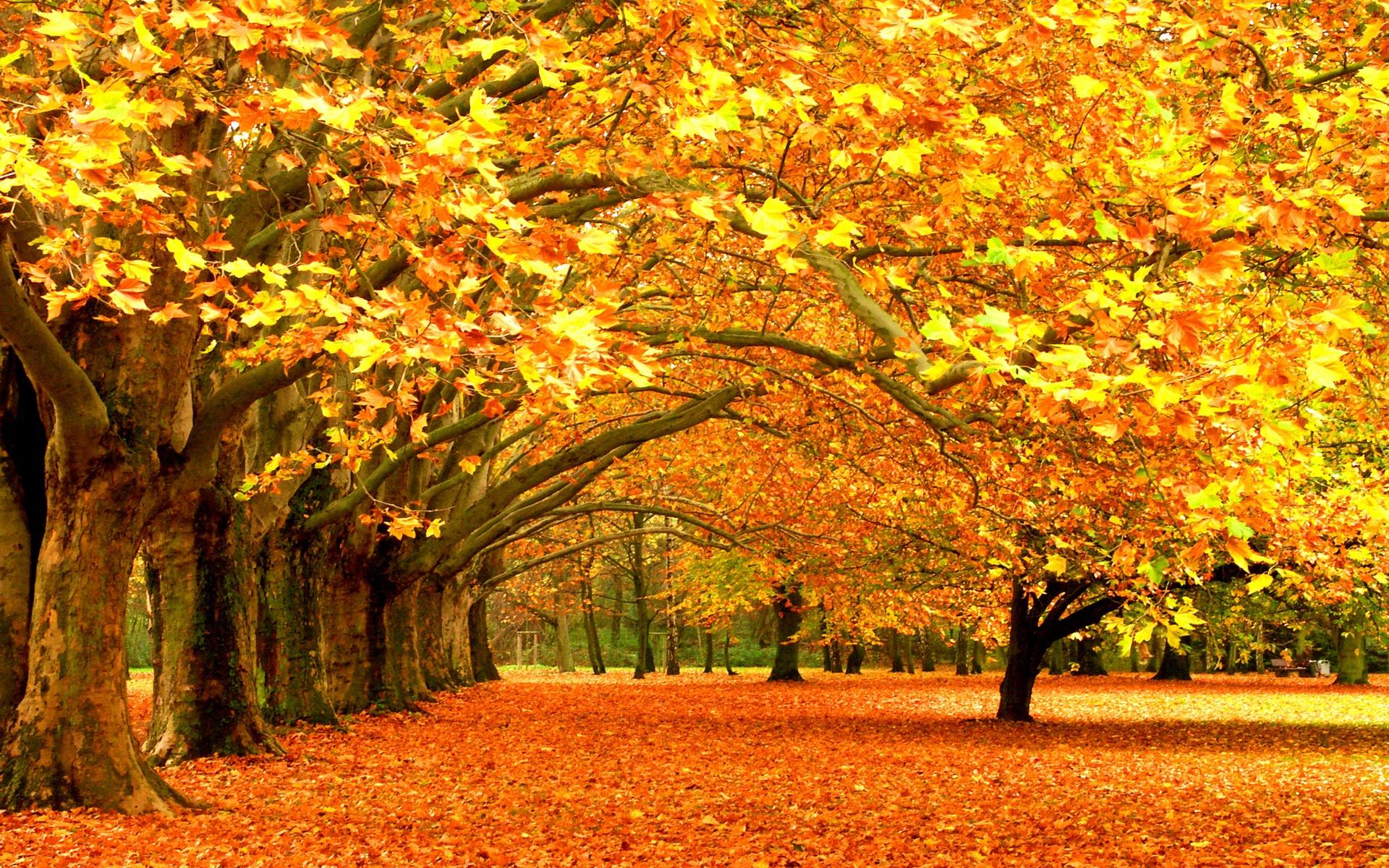 Autumn Desktop Backgrounds Hd Sf Wallpaper