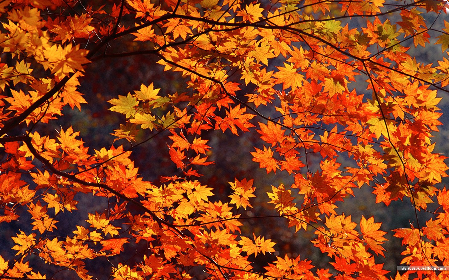 Autumn Desktop Wallpaper Free