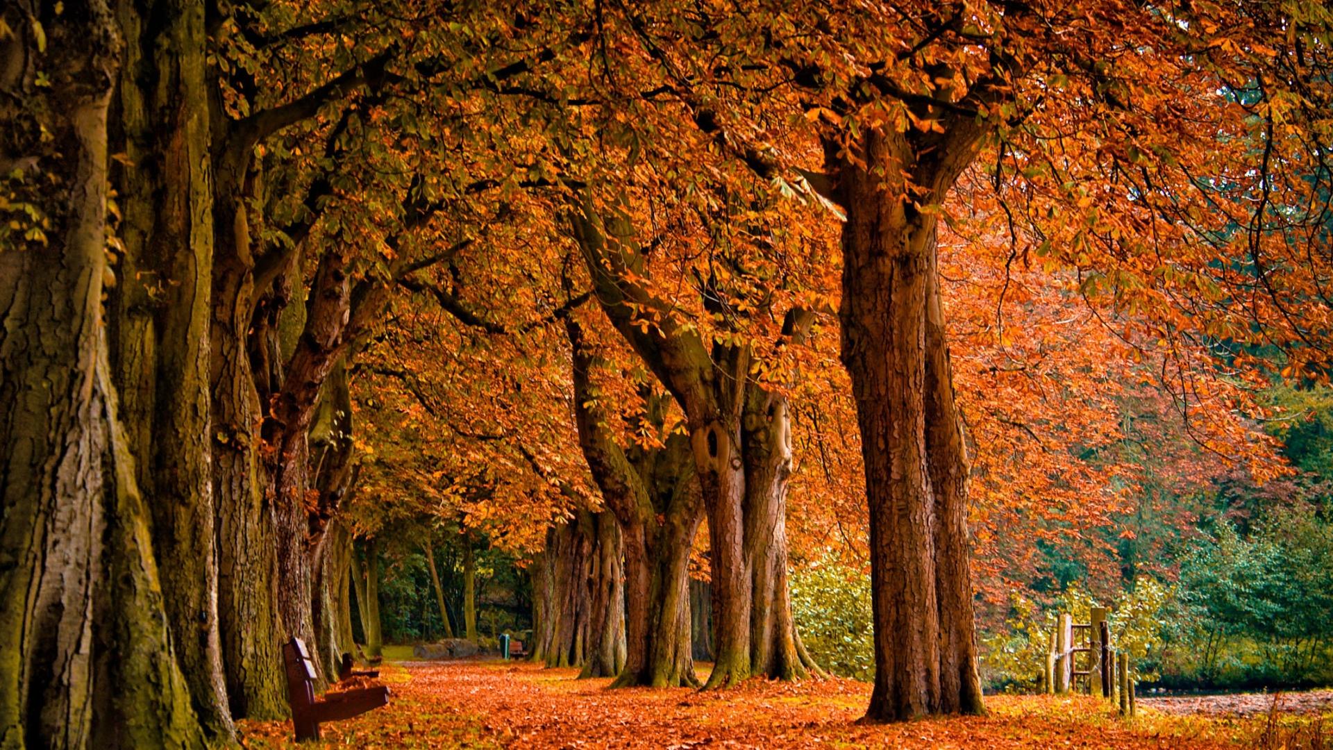 1000+ ideas about Fall Desktop Backgrounds on Pinterest   Fall